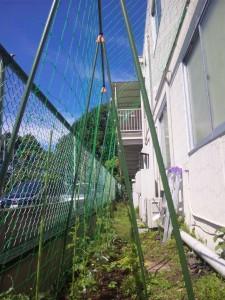 三鎮工業 グリーンカーテン